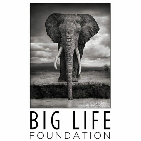 Brandt Nick: Big Life Foundation